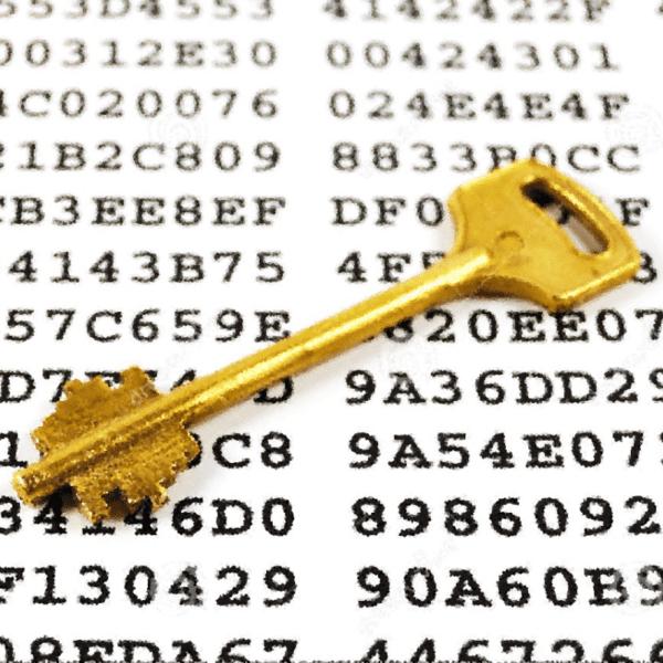 Операторы шифровальщика WannaRen дали пользователям ключи, полный курс по кибербезопасности секреты хакеров Тбилиси